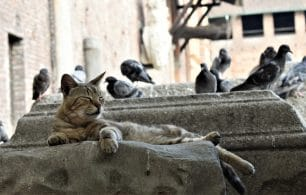 Cat and pigeons