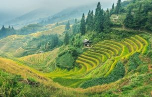 Chinese rice fields