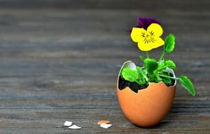 Spring flowers in egg shell