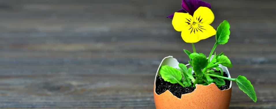 Spring flowers in egg shell