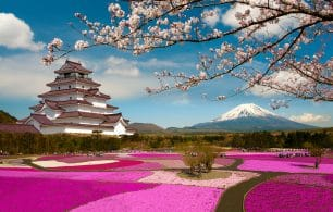 Japan temple cherry blossom