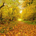 Autumn park trail