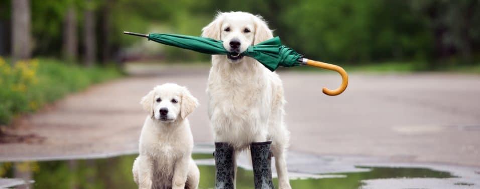 Dogs umbrella