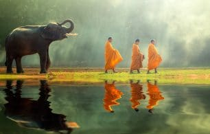 Elephants and monks