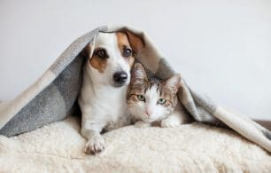 Dog and cat together under blanket