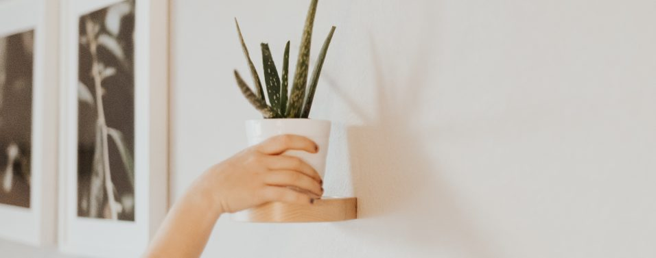 Aloe on shelf