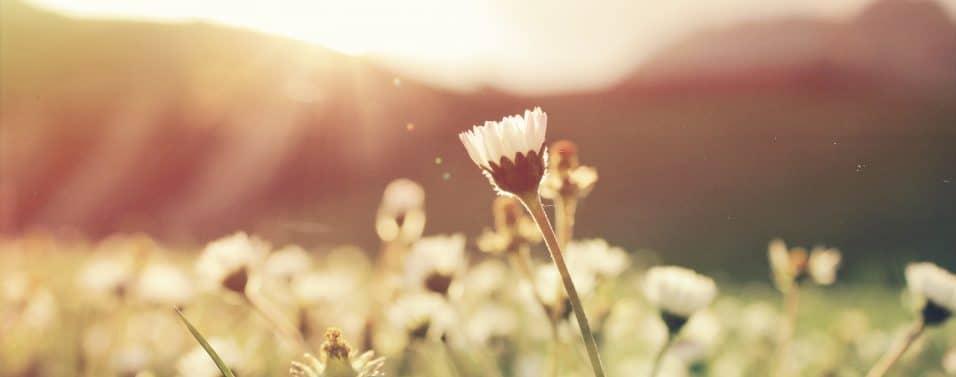 flowers with sun glare