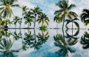 Palm trees reflected on water